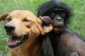 dog-bonobo1