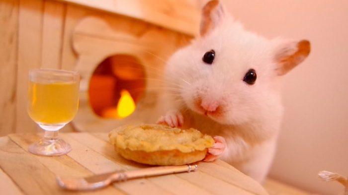 Hamster-omendo-1024x576